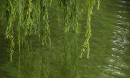 Las ramas del sauce se reflejan en el agua verde del rive Foto de archivo libre de regalías