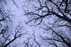 Las ramas desnudas de los árboles Imagen de archivo