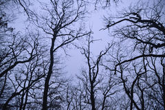 Las ramas desnudas de los árboles en noche Foto de archivo libre de regalías