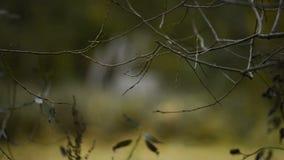 Las ramas desnudas tiemblan en el viento en otoño almacen de metraje de vídeo