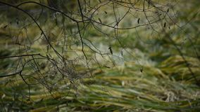 Las ramas desnudas tiemblan en el viento en otoño almacen de video