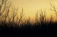 Las ramas en New Hampshire atan el mundo con sus ojos Fotografía de archivo