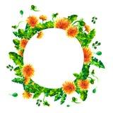 Las ramas florecientes de la primavera de la acuarela, diente de león florecen, marco redondo del flor aislado en el fondo blanco Foto de archivo