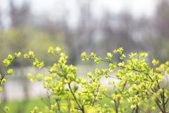 Las ramas verdes del arbusto Fotos de archivo