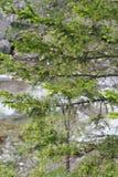 Las ramas verdes fueron comidas Imagen de archivo