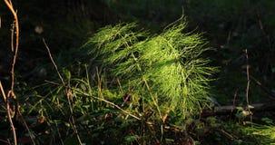 Las ramas y las plantas verdes así como la otra vegetación en el bosque durante el d3ia almacen de video