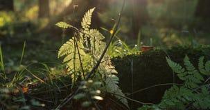 Las ramas y las plantas verdes así como la otra vegetación en el bosque durante el d3ia metrajes