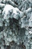 Las ramificaciones de un piel-árbol Foto de archivo libre de regalías