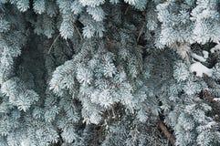 Las ramificaciones de un piel-árbol Imagen de archivo