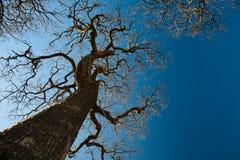 Las ramificaciones del árbol tienen gusto de los brazos Imagen de archivo libre de regalías