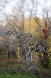 Las ramificaciones descubiertas de árboles en otoño estacionan fotos de archivo