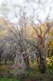 Las ramificaciones descubiertas de árboles en otoño estacionan imagen de archivo