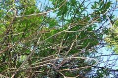 Las ramitas del abedul con el brillo verde joven se van Fotografía de archivo