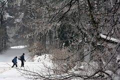 Las ramitas negras hermosas envolvieron helada y a dos caminante en el fondo imagen de archivo libre de regalías