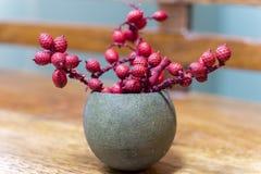 Las ramitas rojas delicadas minúsculas del brote del cono en una vaina de planta agrietaron el lik abierto Fotografía de archivo