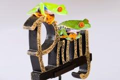 Las ranas de árbol Eyed rojas en una rogación firman fotografía de archivo