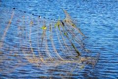 Las redes de pesca salen del agua Fotografía de archivo