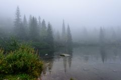 las reflexiones de árboles en el lago riegan en la niebla de la mañana Imagen de archivo libre de regalías