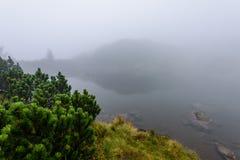 las reflexiones de árboles en el lago riegan en la niebla de la mañana Fotografía de archivo libre de regalías