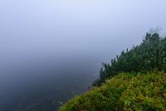las reflexiones de árboles en el lago riegan en la niebla de la mañana Foto de archivo libre de regalías