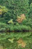 las reflexiones de árboles en el lago riegan en la niebla de la mañana Imágenes de archivo libres de regalías
