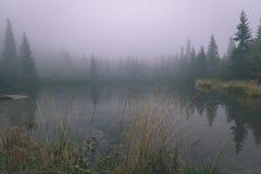 las reflexiones de árboles en el lago riegan en la niebla de la mañana - vin Fotos de archivo