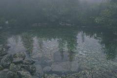 las reflexiones de árboles en el lago riegan en la niebla de la mañana - vin Foto de archivo
