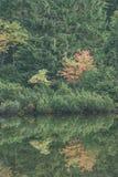 las reflexiones de árboles en el lago riegan en la niebla de la mañana - vin Fotos de archivo libres de regalías
