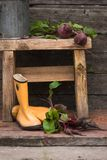 las remolachas frescas arraigan con las hojas en las botas de goma Aún vida rural Imagen de archivo