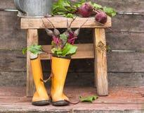 las remolachas frescas arraigan con las hojas en las botas de goma Aún vida rural Fotografía de archivo