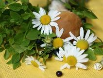 Las rośliny na pielusze Fotografia Royalty Free