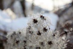 Las rośliny w Alps górach w Austria w zimie Zdjęcia Stock