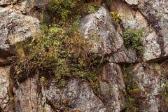 Las rocas emparedan con las plantas silvestres en él Fotografía de archivo libre de regalías