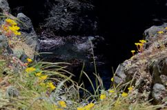 Las rocas negras en un chanel de la oleada visto de la flor cubrieron el acantilado imagen de archivo