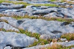Las rocas y la vegetación en Doolin varan, condado Clare, Irlanda Fotos de archivo