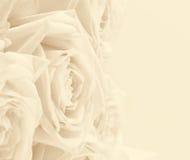 Las rosas blancas hermosas entonaron en sepia como fondo de la boda suave Imagen de archivo libre de regalías