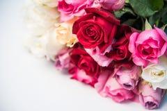 Las rosas coloridas se colocan en un fondo blanco Imágenes de archivo libres de regalías