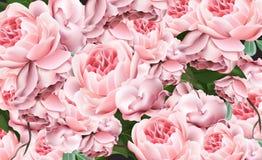 Las rosas del rosa del modelo del día de tarjetas del día de San Valentín Vector ejemplos realistas Imágenes de archivo libres de regalías