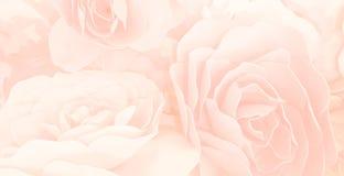 las rosas dulces del color florecen en el estilo de la falta de definición para el te del modelo del fondo Imagen de archivo