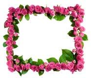 Las rosas enmarcan, aislado Fotografía de archivo libre de regalías