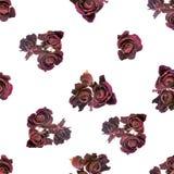 Las rosas oscuras rojas secadas hermosas como como fondo se aíslan encendido Fotos de archivo libres de regalías
