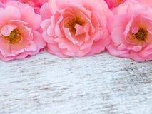 Las rosas rizadas rosadas en el blanco rústico pintaron el fondo imágenes de archivo libres de regalías