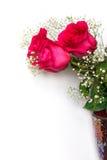 Las rosas rojas hermosas con el gypsophila florecen en un backgroun blanco Foto de archivo libre de regalías