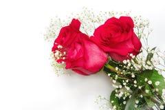Las rosas rojas hermosas con el gypsophila florecen en un backgroun blanco Imagen de archivo