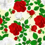 Las rosas rojas y blancas de la textura inconsútil con el fondo fetive del vintage de los brotes y de las hojas vector el ejemplo Imagen de archivo