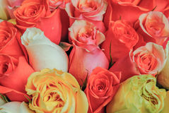 Las rosas rosadas y rojas hermosas florecen en una tienda de flor parisiense Imagen de archivo