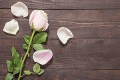 Las rosas rosas claras hermosas están en el fondo de madera Fotos de archivo