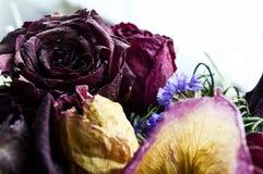 Las rosas secadas Foto de archivo libre de regalías