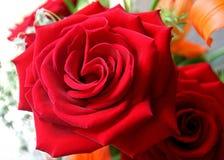 Las rosas son rojas imagenes de archivo