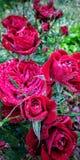 Las rosas son rojas imagen de archivo